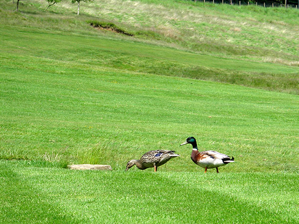 Visitor Green Fees